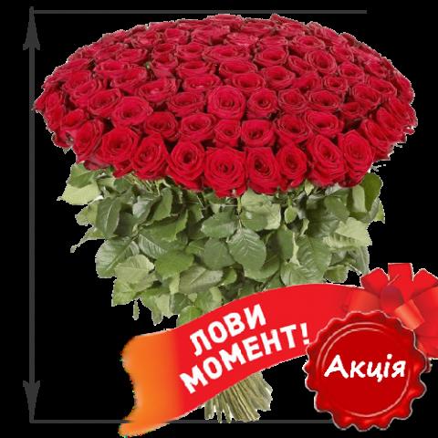 101 краснвая роза 50см