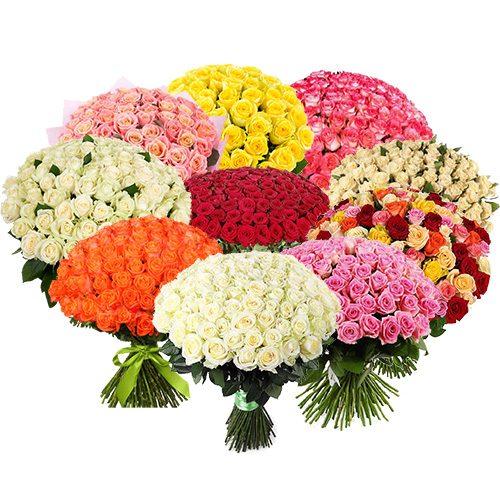 фото 1001 роза разных сортов